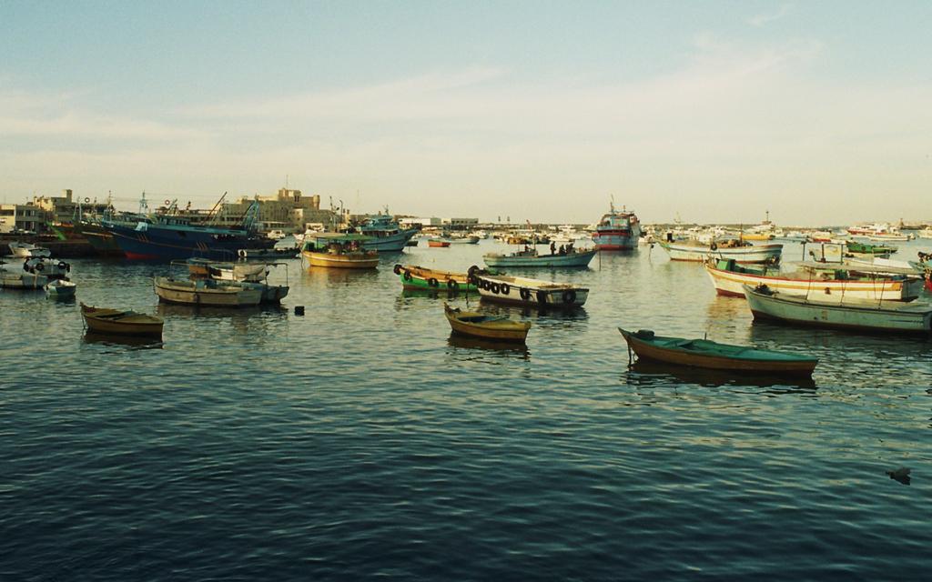 Discover Alexandria, Activities